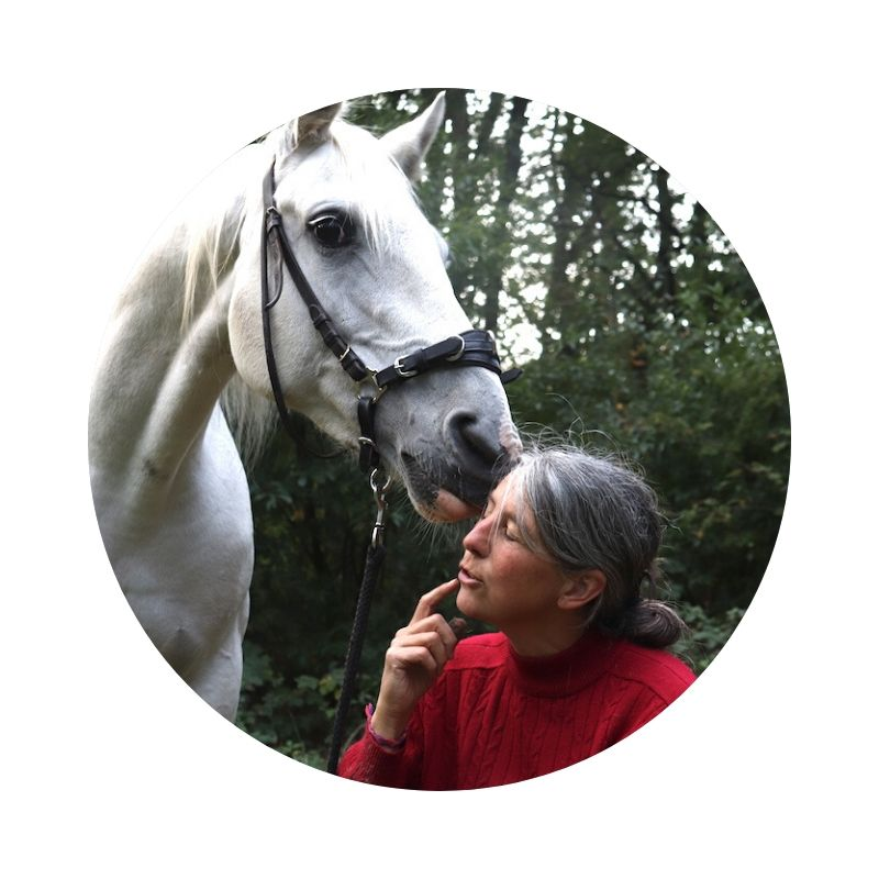 contact spelen-met-paarden